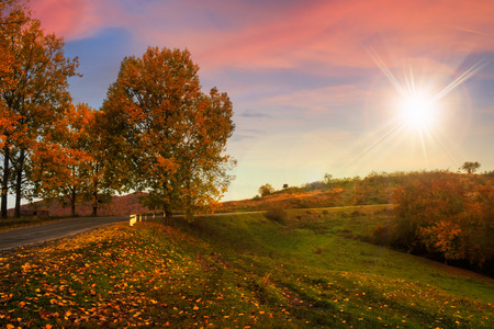 asphalt road  passes through the autumn shaded forest at sunset Stock Photo