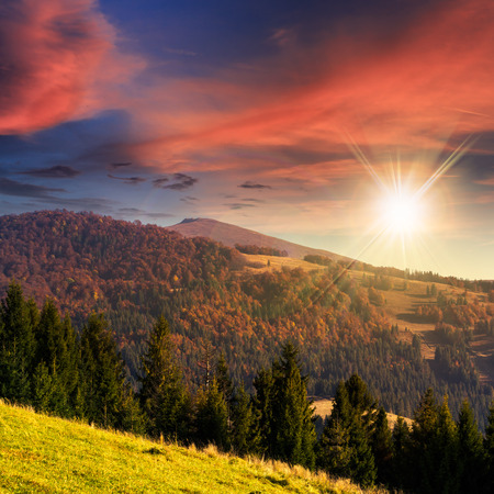 coniferous green forest on hillside meadow in front of a mountain at sunset