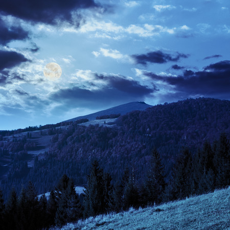 coniferous green forest on hillside meadow in front of a mountain at night in full moon light Stock Photo