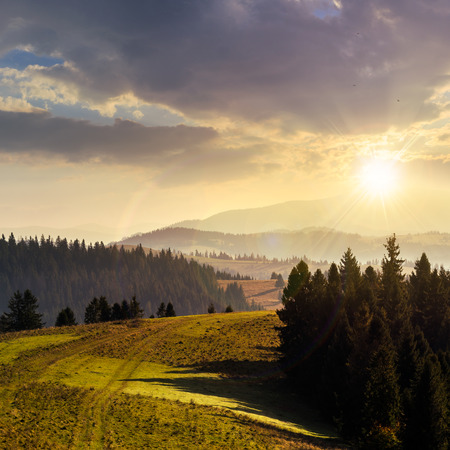 coniferous forest on hillside over foggy valley in autumn mountains at sunset photo