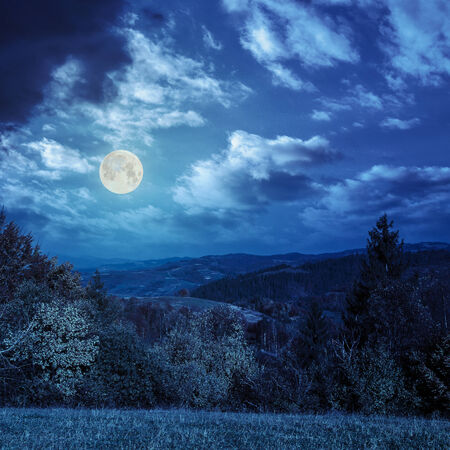 fool moon: yellow and orange trees on autumn meadow in mountains at night in fool moon light Stock Photo