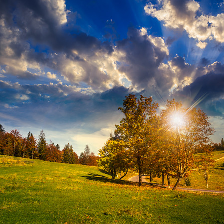 asphalt road going through green meadow with trees near autumn forest with foliage on hill at sunset Stock Photo