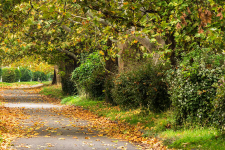 wide trail with foliage in the shade of autumn trees