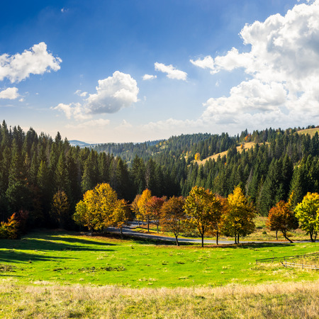 asphalt road going through green meadow with trees near autumn forest with foliage in mountains Stock Photo