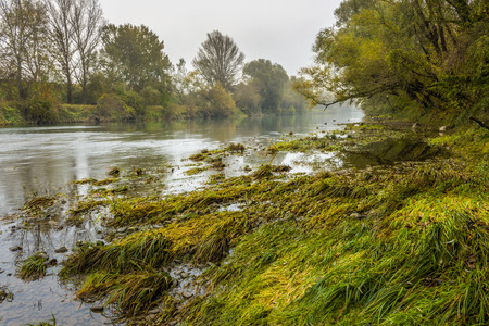 forest river bank with grass in fog on autumn rainy day