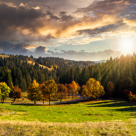 asphalt road going through green meadow with trees near autumn forest with foliage in mountains at suset