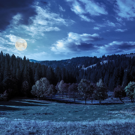 asphalt road going through green meadow with trees near autumn forest with foliage in mountains at night in full moon light