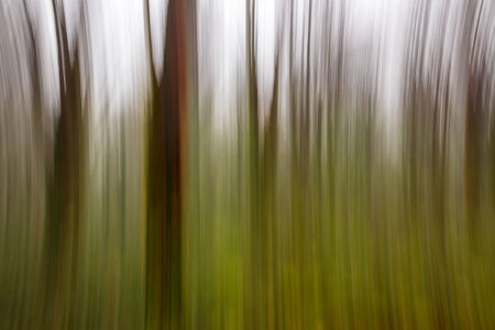 abstract motion blur of autumn forest trees in fog