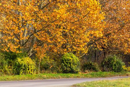 yellow foliage trees  near asphalt road