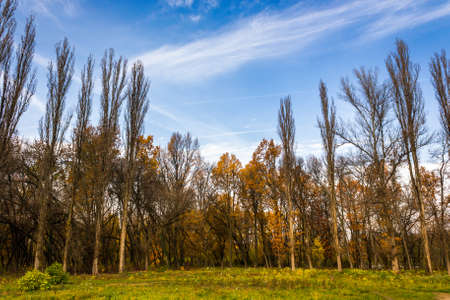 forest glade  in the cool shade of the trees a warm autumn day Stock Photo