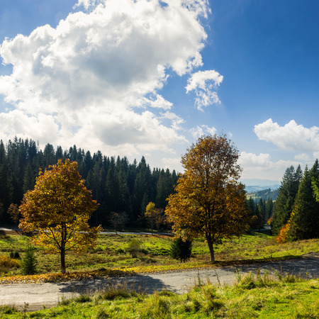 asphalt road going through green meadow with trees near autumn forest with foliage on hill