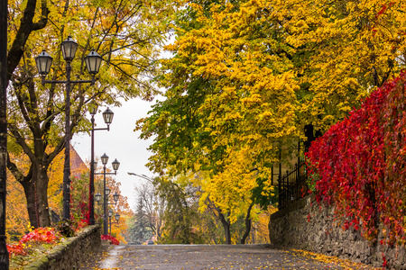 urban landscape. street of the old town is wet after rain, with yellowed trees, red ivy on the wall and street lamps photo