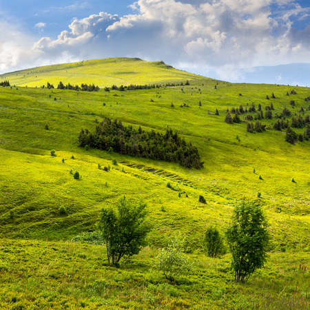 two trees in front of mountain hillside with coniferous forest and high peak under cloudy sky Stock Photo