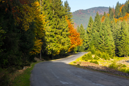 curve asphalt road going passes through the autumn shaded forest in mountains