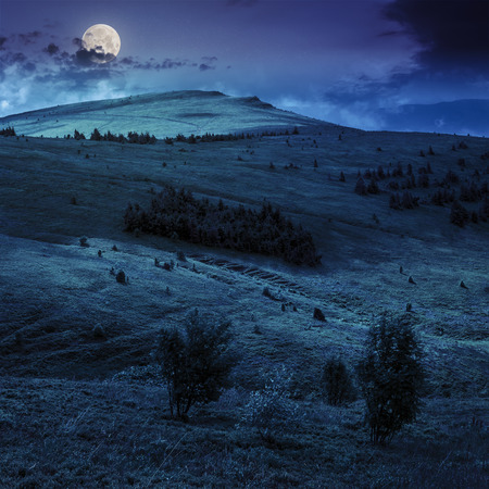 two trees in front of mountain hillside with coniferous forest and high peak under cloudy sky at night in full moon light Stock Photo