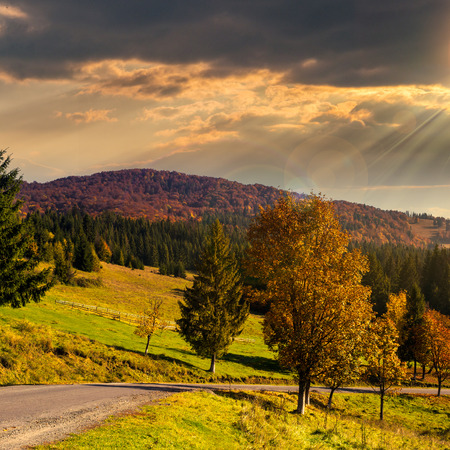asphalt road going  passes through the autumn forest in mountain in sunset light Stock Photo