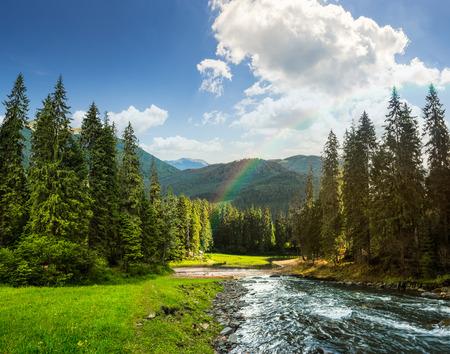 arbol de pino: paisaje collage de pinos en las monta�as y un r�o que fluye frente al lago en la luz del atardecer con el arco iris Foto de archivo