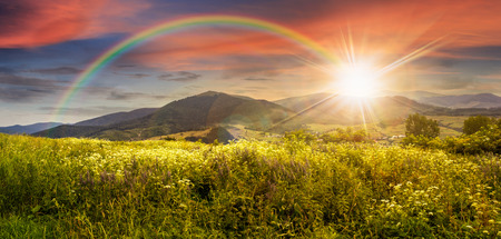 composite mountain landscape. wild flowers on meadow in mountains in sunset light with rainbow Foto de archivo