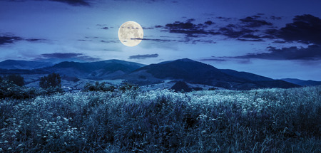 composite mountain landscape. wild flowers on meadow in mountains at night in full moon light
