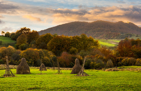 composite agriculture landscape with stack of hay on a green meadow near forest near the foot of the mountain in morning light