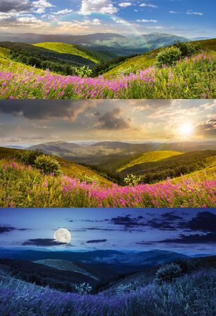 day and night collage of composite landscape with high wild grass and purple flowers on the top of high mountain 免版税图像