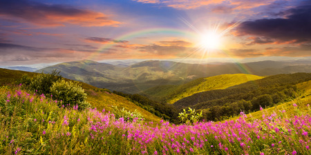 composite landscape with high wild grass and purple flowers on the top of high mountain in sunset light with rainbow