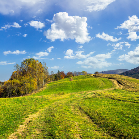 composite autumn landscape. path through the meadow on mountain top in morning light