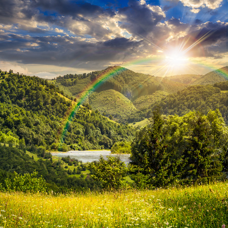 composite mountain summer landscape. pine trees on hillside meadow with wild flowers near the river in mountains in sunset light with rainbow