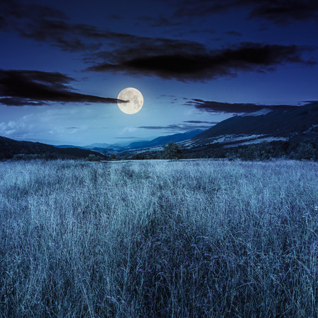 composite mountain summer landscape. Meadow with wild flowers in mountains at night in full moon light Stock Photo