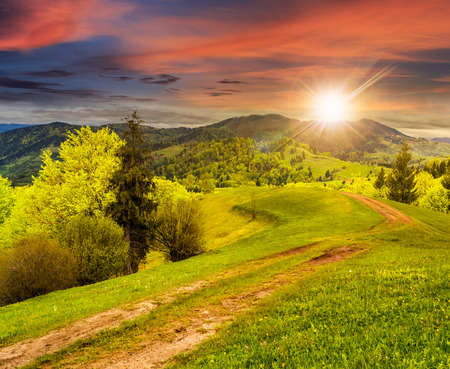 composite mountain landscape with  road on hillside meadow few fir trees and forest  on both sides of the road in sunset light