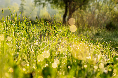 close-up of wet grass on forest glade with shiny blurs  in morning warm sun light Stock Photo