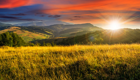 山の夏の風景。背の高い黄色の草と夕日の光の中で丘の中腹に森林と草原の牧草地