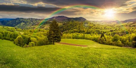 panoramic composite landscape. hillside of mountain range with coniferous tree on a green valley in sunset light with rainbow