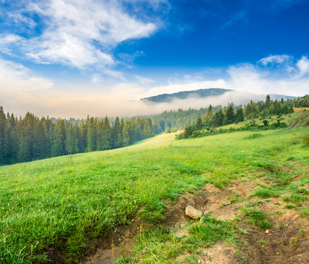 surrounds: summer landscape. fog from conifer forest surrounds the mountain top in morning light