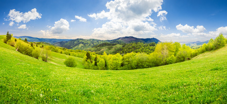 panoramic mountain summer landscape. trees near meadow and forest on hillside in morning light
