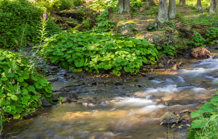 beautiful and clean little streem with several stones and green plants on the bank in the forest