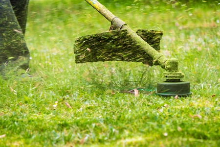 close up shot of gasoline trimmer head with nylon line cutting fresh green grass to small pieces Imagens