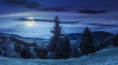 hillside of mountain range with coniferous forest and meadow at night in full moon light