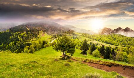 surrounds: composite summer landscape. fog in conifer forest surrounds the castle on mountain hill with path in sunset light