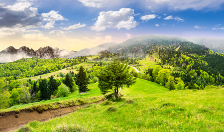 surrounds: composite summer landscape. fog in conifer forest surrounds the castle on mountain hill with path in morning light