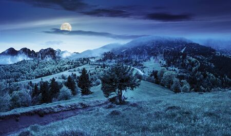 composite summer landscape. fog in conifer forest surrounds the castle on mountain hill with path at night in full moon light