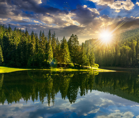 日没の光の山の松の森の近くの湖