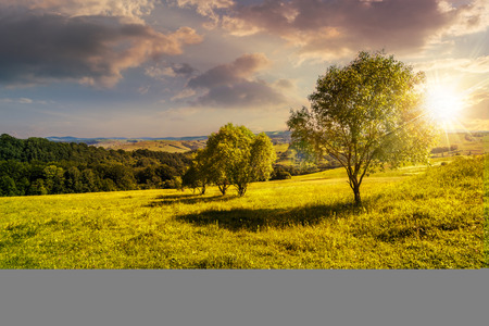 few trees on agricultural meadow with flowers on  hillside near forest in evening light Stock Photo