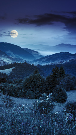 mountain valley: summer mountain landscape. fog from conifer forest surrounds the mountain top at night in full moon light