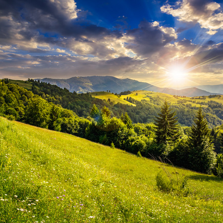 mountain valley: hillside of mountain range with coniferous forest and meadow in evening light Stock Photo