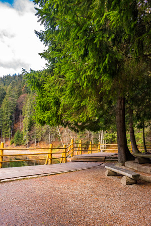 pier on the Lake in mountain near coniferous forest Stock Photo - 41855425
