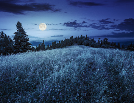 meadow with tall grass on a mountain top near coniferous forest at night in full moon light