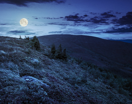 horison: stones and conifer trees on hillside of a high mountain range at night in full moon light