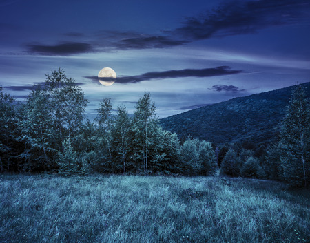 meadow with small purple flowers near the forest at the foot of the mountain at night in full moon light Stock Photo