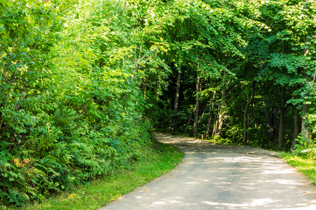asphalt road to the green forest through shaded tunnel of trees